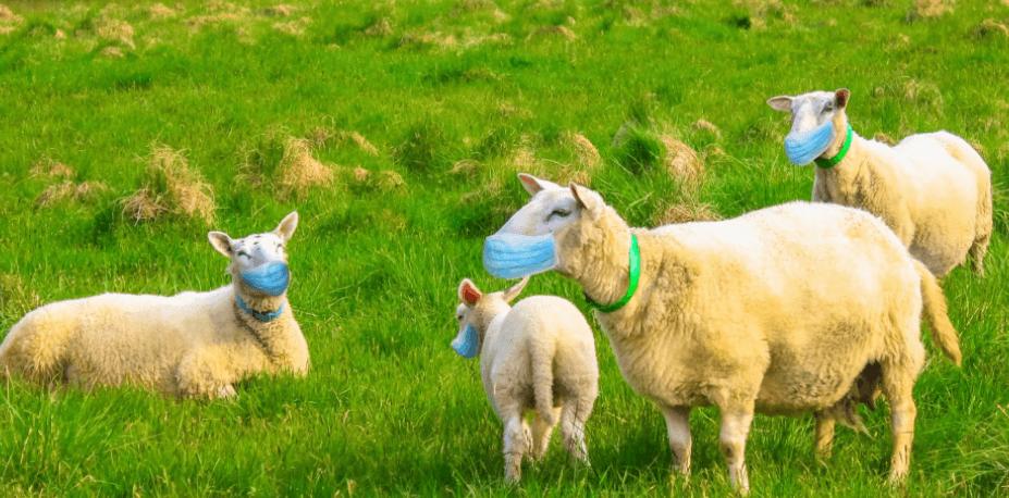 Herd Immunity - COVID-19