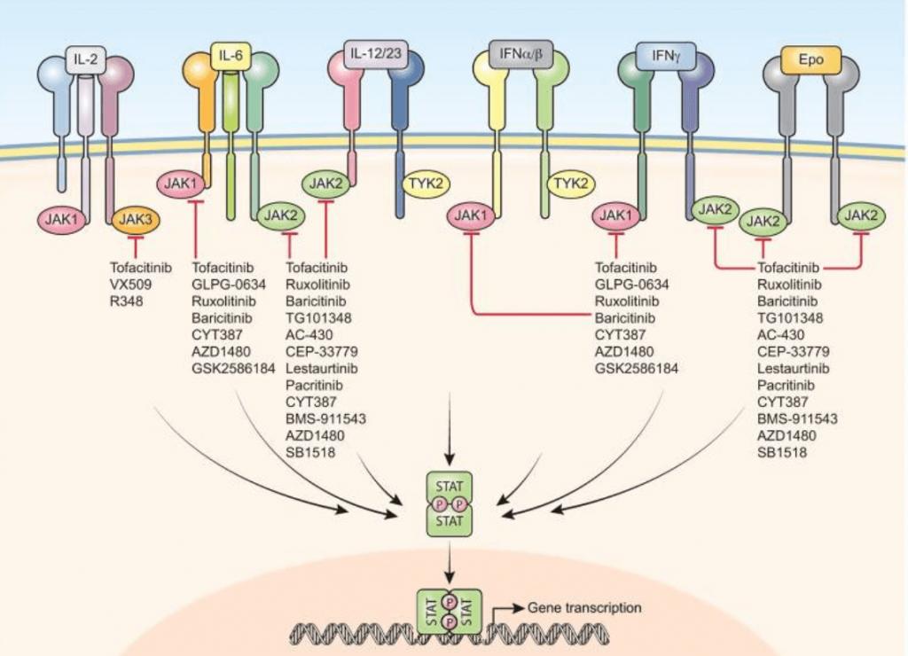 JAK inhibitors in COVID-19