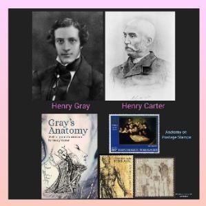 History Today in Medicine – Dr. Henry Gray